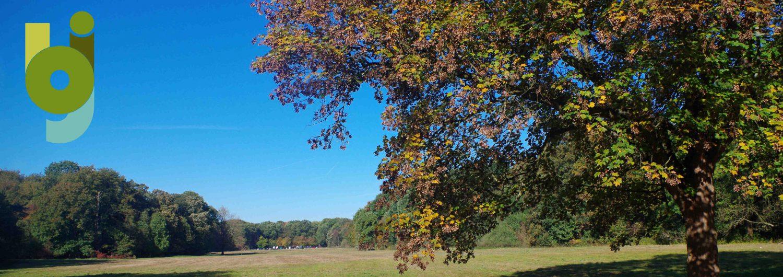 Herbst auf der Gleuler Wiese