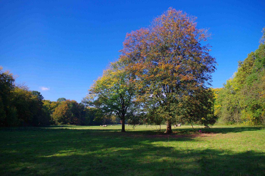 Herbst Grüngürtel