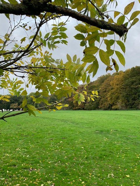 Herbst auf der Gleueler Wiese